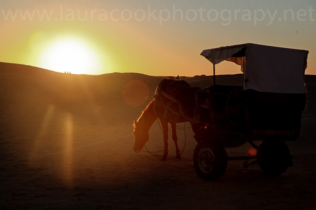 My transport in the desert was a little more sedate than a camel. When I had my back turned I saw my horse and cart trundling off!
