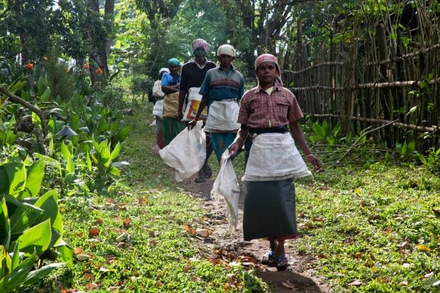 Coffee pickers in Elephant Valley, Tamil Nadu, India.