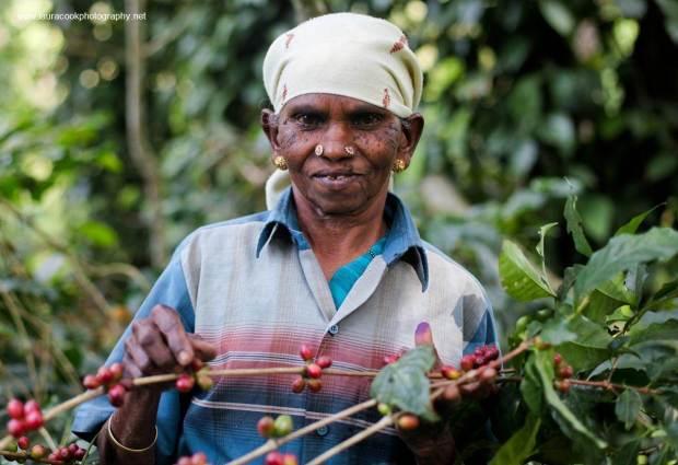 indiacoffee6