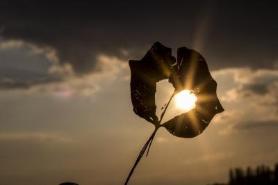 sun-622740_1920
